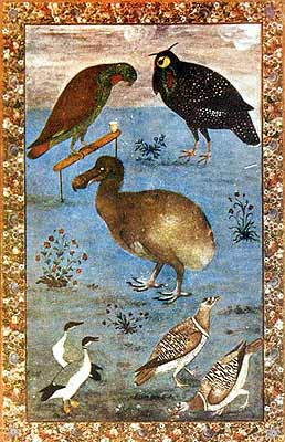 Birds: Loriquet (Coryllis vernalis), Horned Pheasant (Tragopan melanocephalus), Dodo (Raphus cucullatus), Ducks, and Partridges (Illustration to the Baburnama), circa 1620 - 1625 (Institute of Oriental Studies. St. Petersburg).