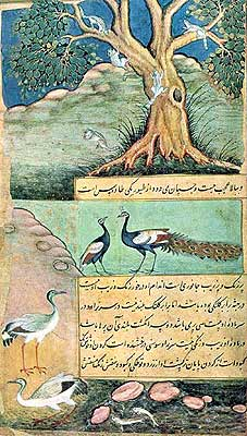 Squirrels, A Peacock and a Pea-Hen, Sarua Cranes and Fishes by artist Bhawani, circa 1598 (National Museum, New Delhi). The artist of this painting Bhawani, excelled in painting birds and animals. In the upper-half can be seen squirrels playing in a tree. In the middle, a peacock and peahen are shown, below a pair of sarus cranes, and in the pond a pair of fishes. It is one of the best paintings of birds and animals in the Babur Nama.