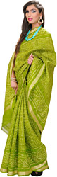 Parrot-Green Bandhani Tie-Dye Gharchola Sari from Gujrat with Golden Thread Weave