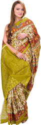 Cloud-Cream and Green Sari with Printed Folk Motifs