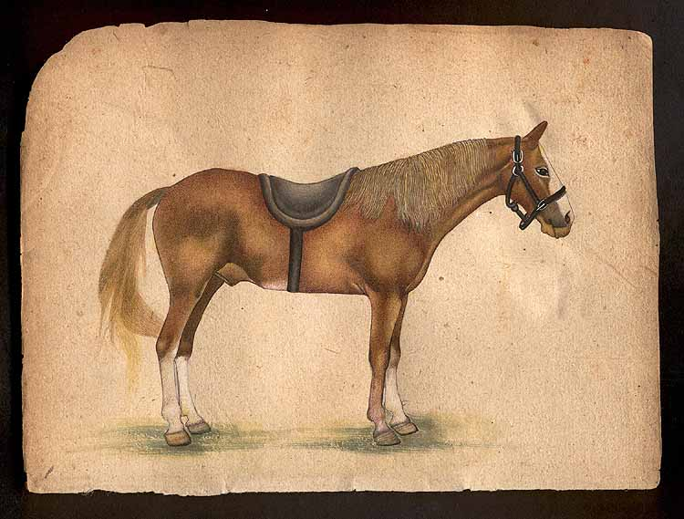 a discussion on the missouri fox trotter This is a list for rescuing missouri fox trotters only crossbred and  discussion   to connect with missouri fox trotter rescue, sign up for facebook today.