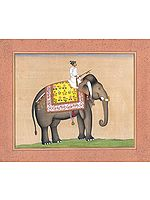 An Elephant from the Royal Stables